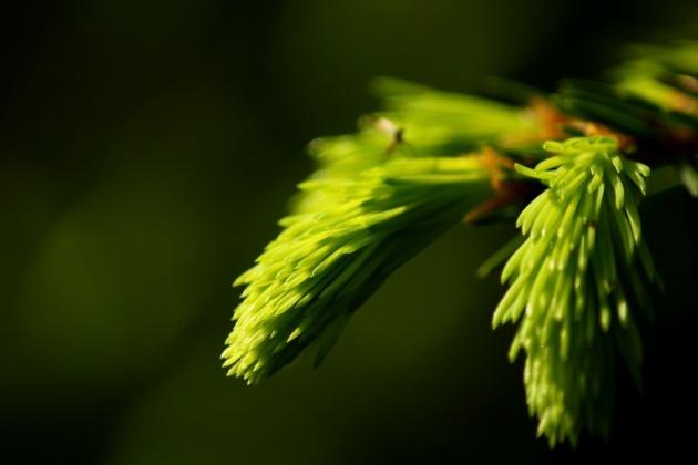 Fotografie przyrodnicze